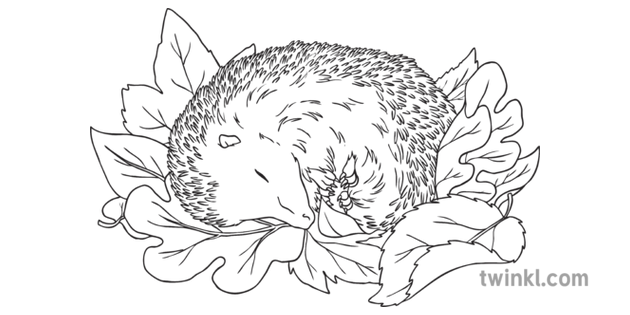 Hedgehog Sleeping In A Pile Of Leaves Autumn Animal Ks2 Black And White