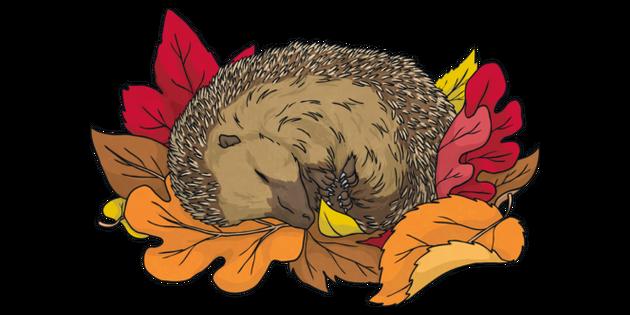 Hedgehog Sleeping In A Pile Of Leaves Autumn Animal Ks2 Illustration