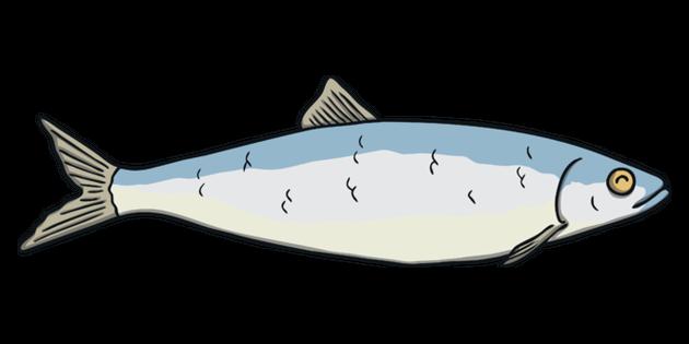 Herring Fish Sea Phonics Family Eyfs Illustration Twinkl