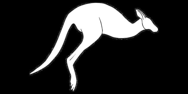 Comment Dessiner Un Kangourou 3 Illustration Twinkl