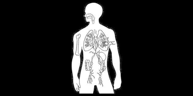 Immune System Anatomy Science Biology Human Body Mps Ks2 B And W Rgb