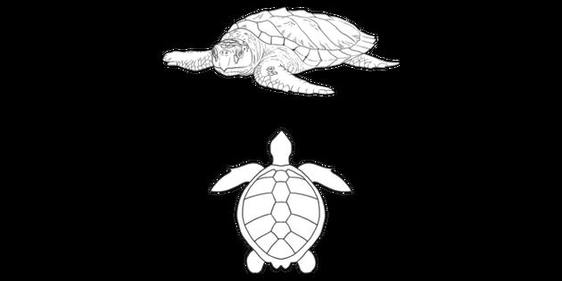 Kemps Ridley Sea Turtle Animal Nature Sea Ocean International Swat Ks2 Black