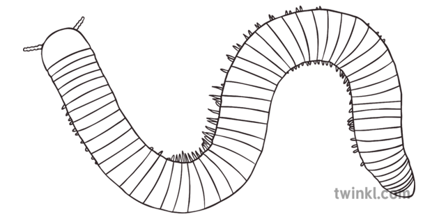 Millipede Black And White 2 Illustration Twinkl