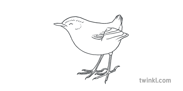 New Zealand Extinct Birds Banner Bush Wren Ks1 Black And White Illustration