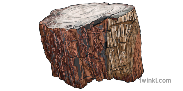 Peachy Petrified Wood Fossil Stone Tree Bark Geography Ks2 Gmtry Best Dining Table And Chair Ideas Images Gmtryco