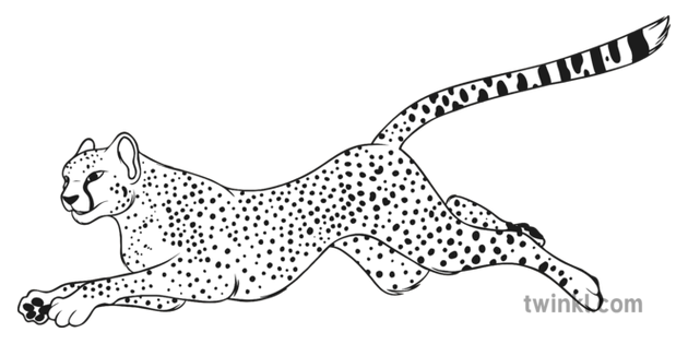cheetah running black and white illustration twinkl cheetah running black and white