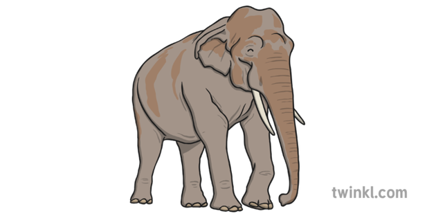 What is an Elephant? - Answered - Twinkl teaching Wiki