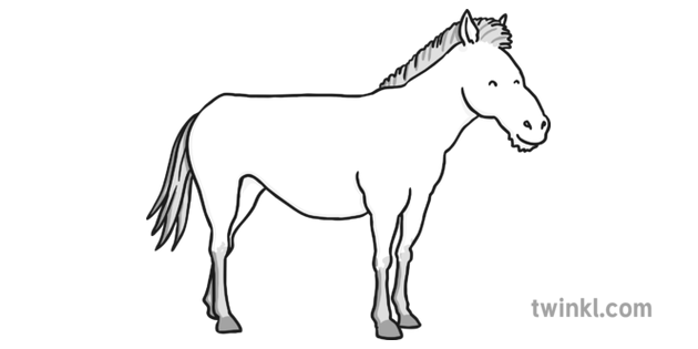 Horse Black and White 4 Illustration - Twinkl