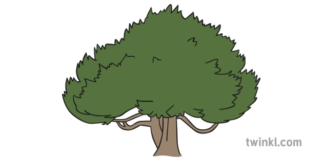 Cartoon Yew Tree : A magic tree is a rare type of lumber tree that requires level 75 woodcutting to chop down, granting 250 woodcutting experience per set of magic logs received.