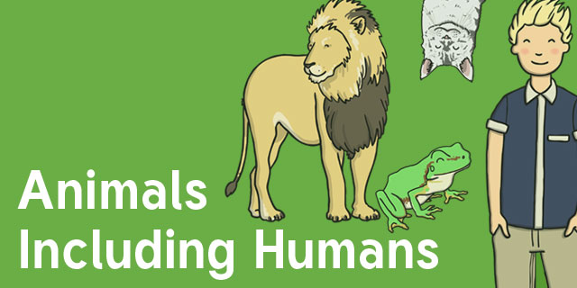 Animals, Including Humans Year 1 - Science Resources