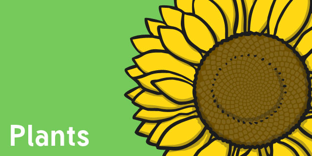 Plants - Year 2 Science Resources