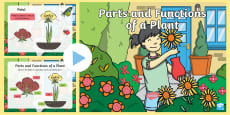 * NEW * Parts of a Plant PowerPoint