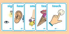 Five Senses Display Posters