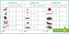 Minibeast Hunt Tally Sheet