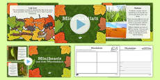 Living Things and their Habitats Microhabitats Lesson Teaching Pack