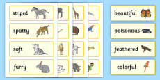 * NEW * US Animal Adjectives Word Cards