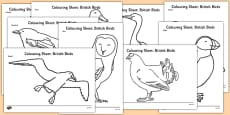 British Birds Colouring Sheets