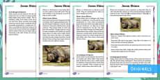 Year 2 Javan Rhinos Differentiated Fact File
