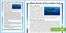 * NEW * Whale Sharks of the Arabian Gulf Fact File