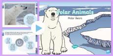 KS1 Polar Bear Fact File PowerPoint