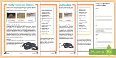 * NEW * Deadly Animals and Creatures Differentiated Reading Comprehension Activity English/German