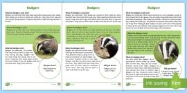 KS1 Foxes Differentiated Fact File - Children's Books ...