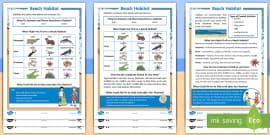 KS1 Beach Habitat Differentiated Reading Comprehension Activity