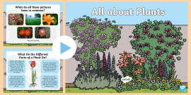 KS1 All About Plants PowerPoint