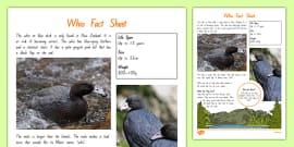 NZ2 T 033 New Zealand Native Birds Whio Fact Sheet ver 1
