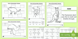 bush tucker display poster australia bush tucker display. Black Bedroom Furniture Sets. Home Design Ideas