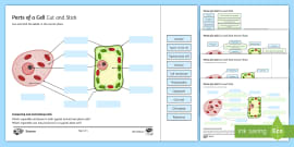 Animal and Plant Cells Match and Draw