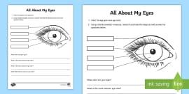 Parts of the Eye Worksheet / Worksheet - Amazing Fact Of The ...