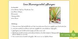 NEW * Aufbau einer Blüte Arbeitsblatt - Plfanze, Blume