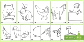 Pets Colouring Sheets