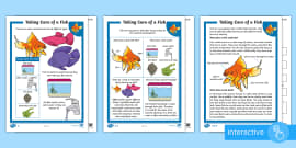 KS1 How to Look After a Fish Differentiated Comprehension Go Respond Activity Sheets