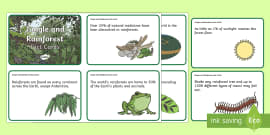Amazing Jungle and Rainforest Display Fact Cards