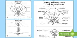 FREE! - Labelling Parts of a Flower Worksheet (teacher made)