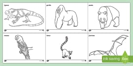 Rainforest Animals for Kids | Printable Rainforest Animal Coloring ... | 135x270