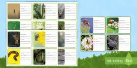 new kleininsekten und weichtiere ausmalbilder