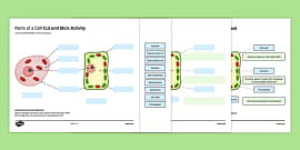 Plant Cell Diagram - Plant, cell, Growth, Topic, Foundation