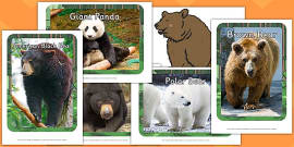Bear Hunt Photographs and Pictures Display Pack