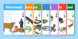 Animal Groups Display Posters