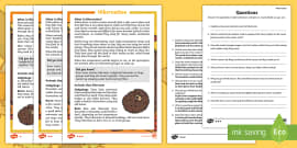 Hibernation Differentiated Reading Comprehension Activity