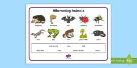 Animal Hibernation Sorting Worksheet Science Resource