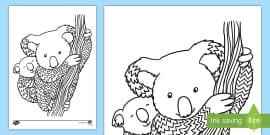 au t2 t 1314 koala mindfulness colouring page english australian ver 1