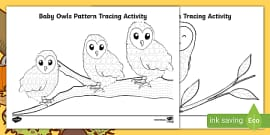 Barn Owls Non-Chronological Report and Reading Comprehension