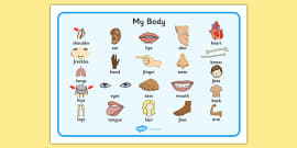 'My Body' Word Mat