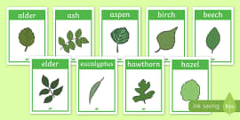 Tree Leaf Identification Display Posters