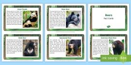Bear Fact Cards
