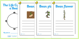 My Diary Of A Bean Plant Booklet Template Bean Growth